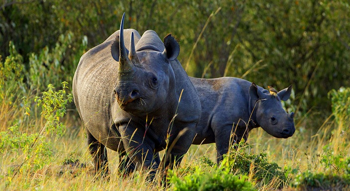 Kenya Holiday Night Safari