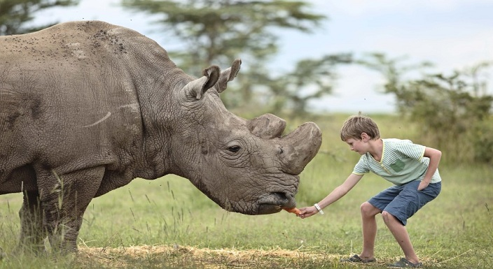 Tanzania Deluxe Safari