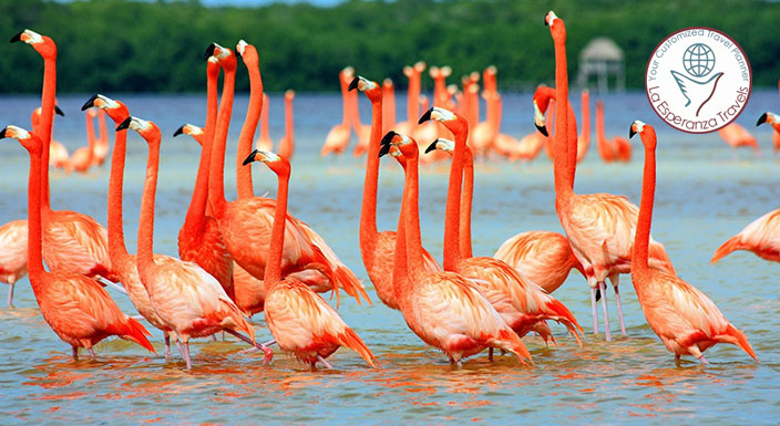 Golden Triangle With Birds