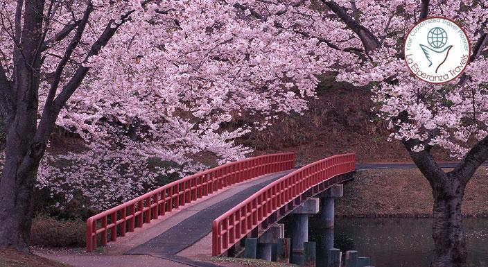 Euphoria Japan