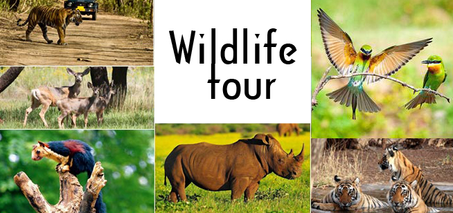 Wildlife Holiday Packages